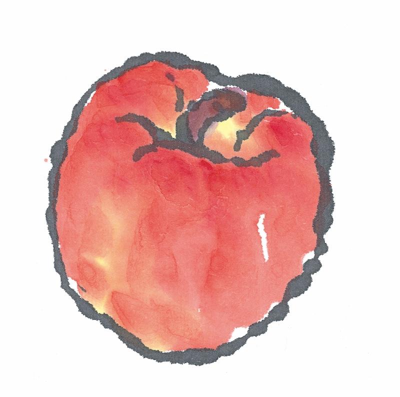 りんご 絵手紙