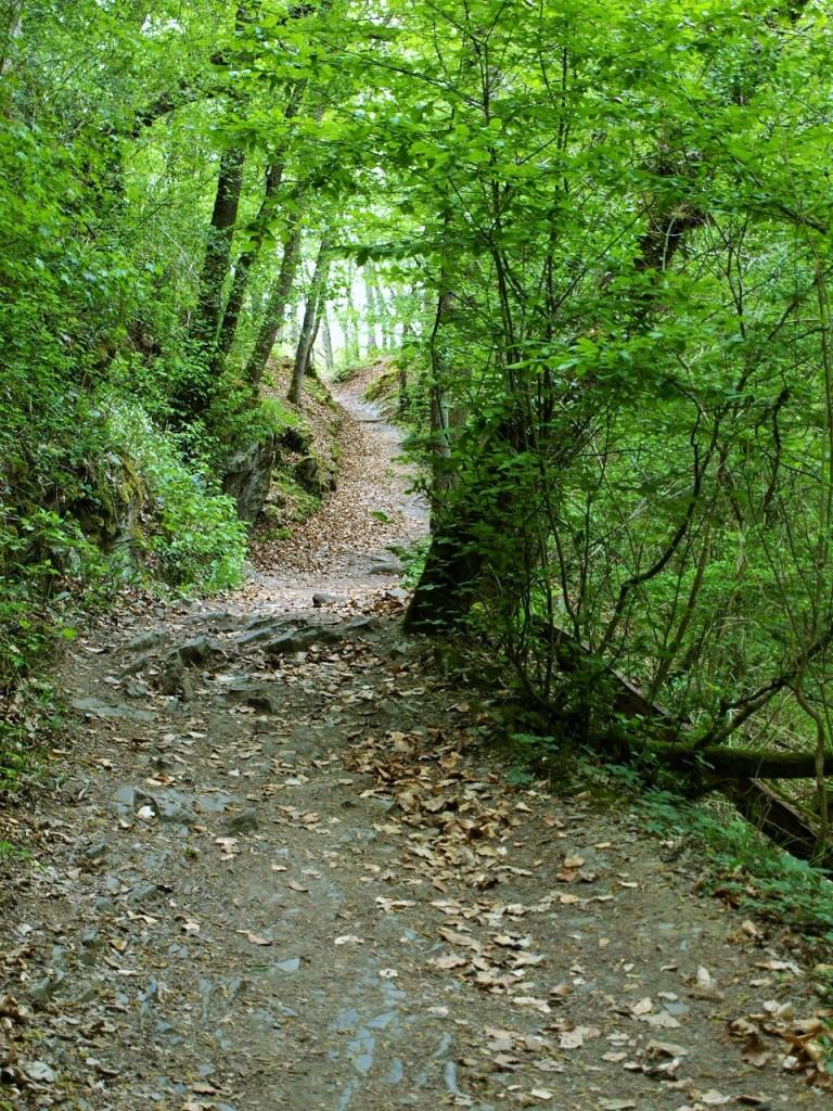 途中上り階段があり、ようやく山道へ。とはいえ、ほとんど平地なので、国はならない。