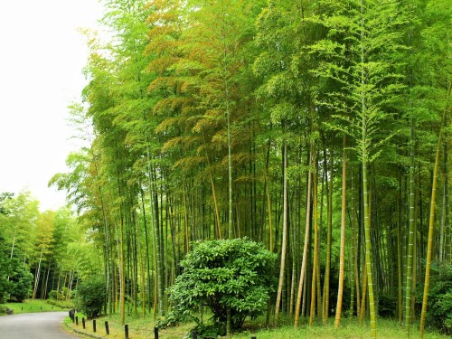 万博記念公園竹