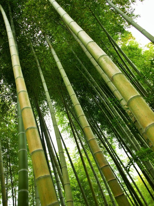 竹bumboo