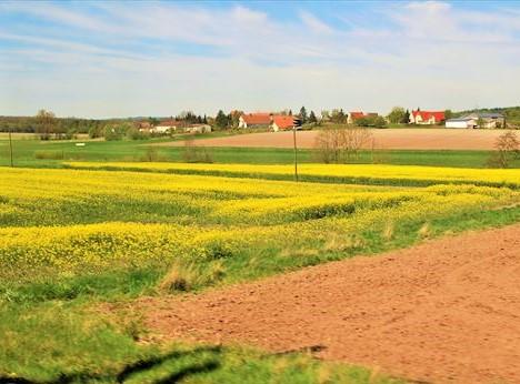 ドイツ_菜の花畑